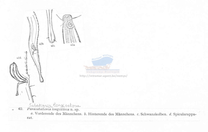 Sabatieria longisetosa