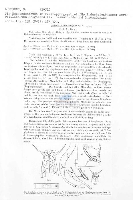 Sabatieria macramphis