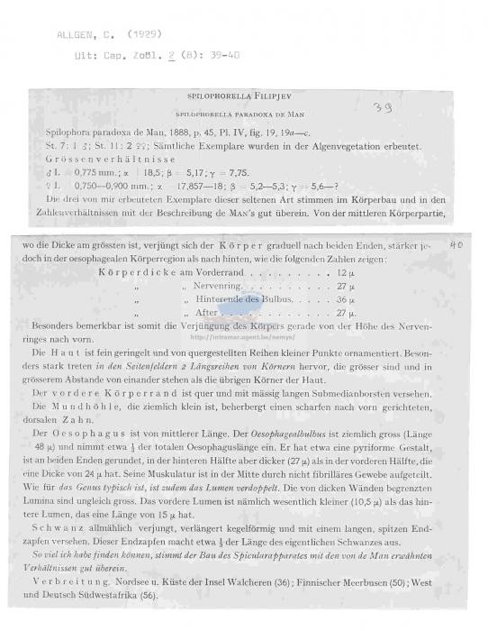 Spilophorella paradoxa