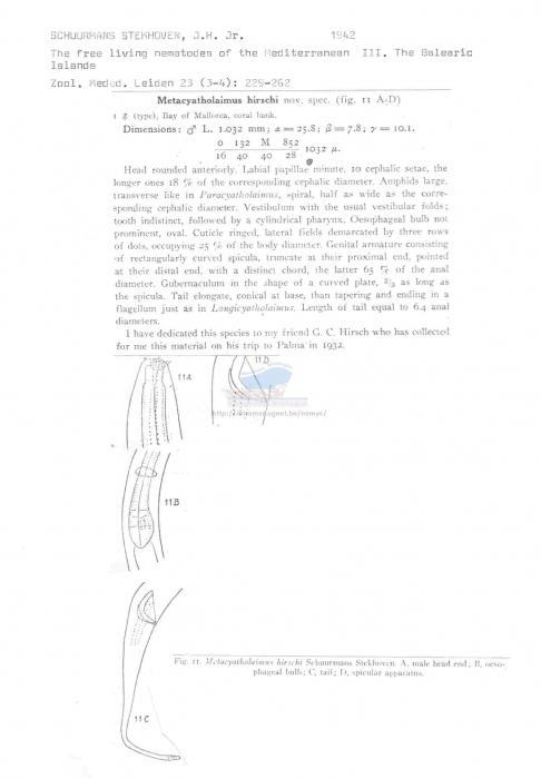 Metacyatholaimus hirschi