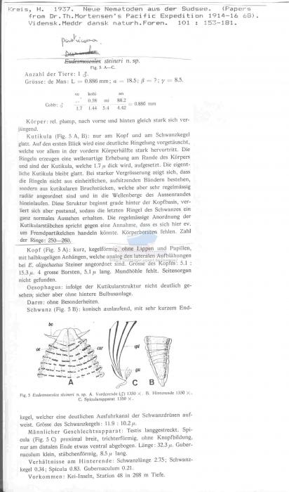 Paratricoma steineri