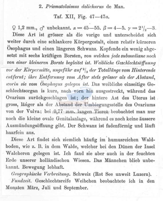 Prismatolaimus dolichurus