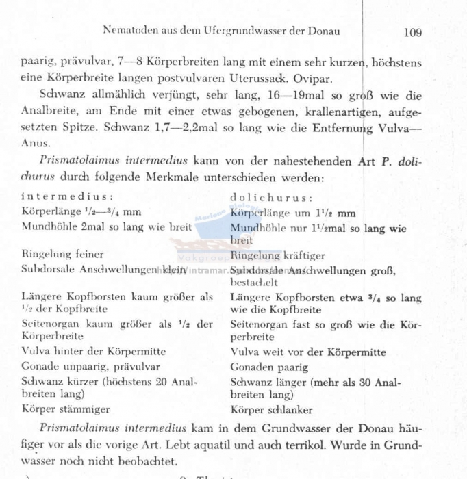 Prismatolaimus intermedius