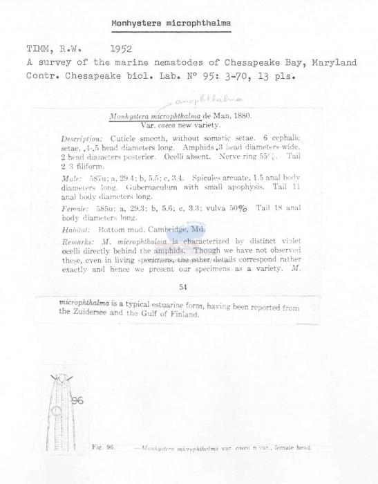 Monhystera microphthalma