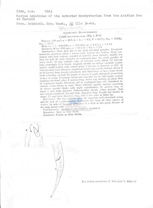 Sphaerotheristus macrostoma