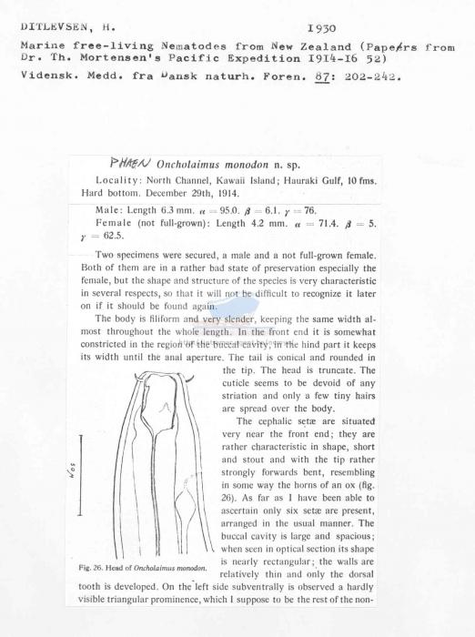 Phaenoncholaimus monodon