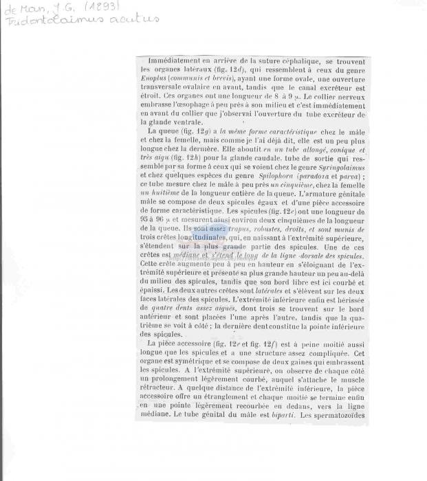 Triodontolaimus acutus