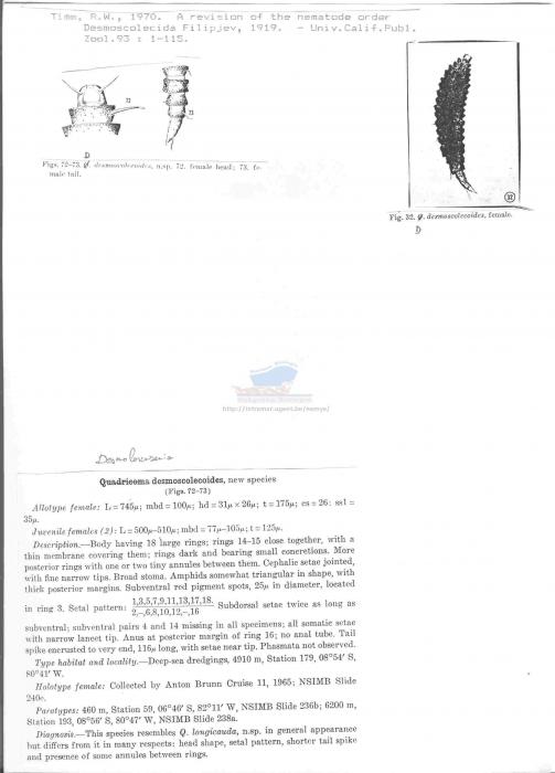 Desmolorenzenia desmoscolecoides