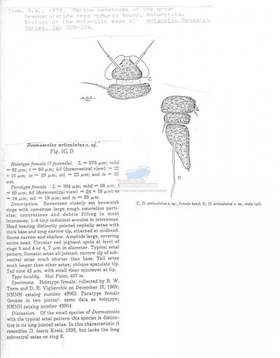 Desmoscolex articulatus