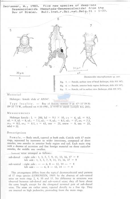 Desmoscolex macrophasmata