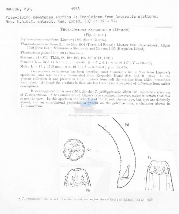 Thoracostoma antarcticum
