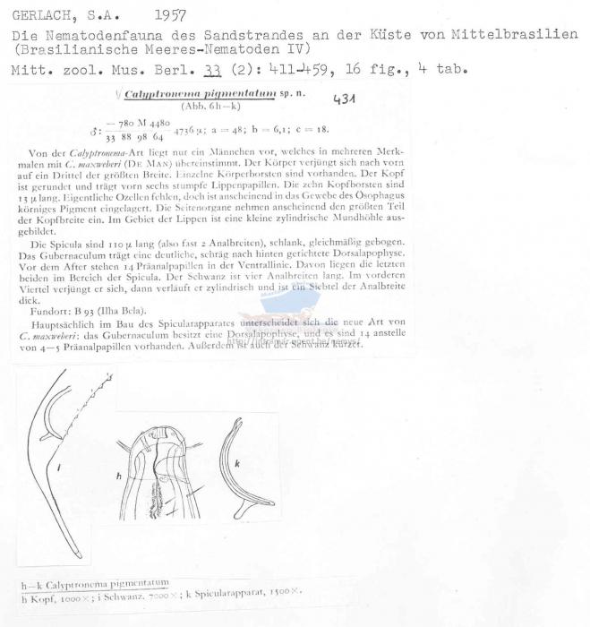 Calyptronema pigmentatum