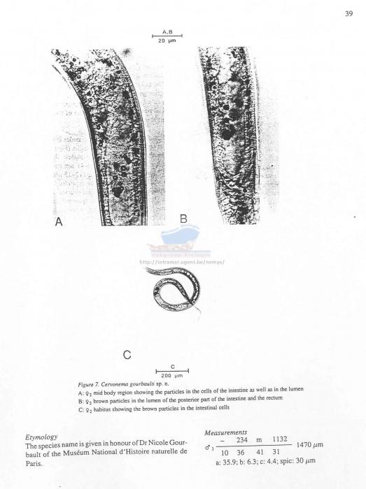 Cervonema gourbaulti