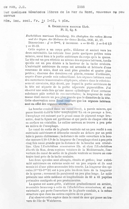 Enchelidium marinum