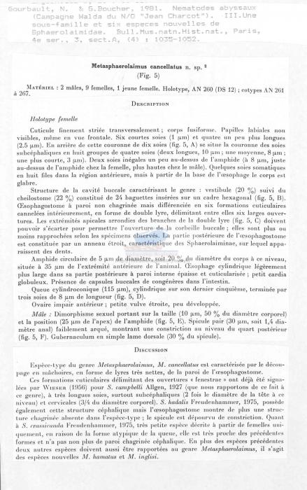 Metasphaerolaimus cancellatus