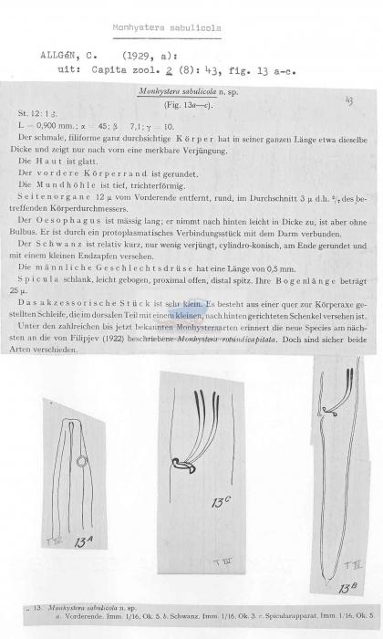 Monhystera sabulicola