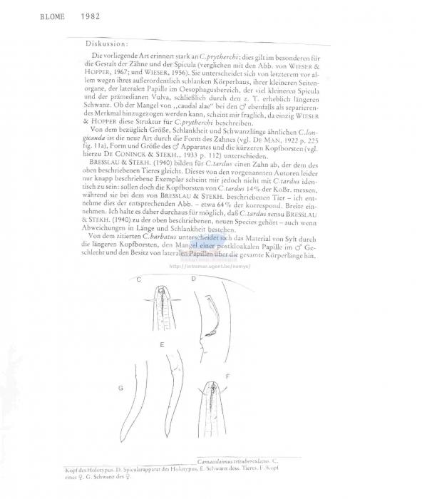 Camacolaimus trituberculatus