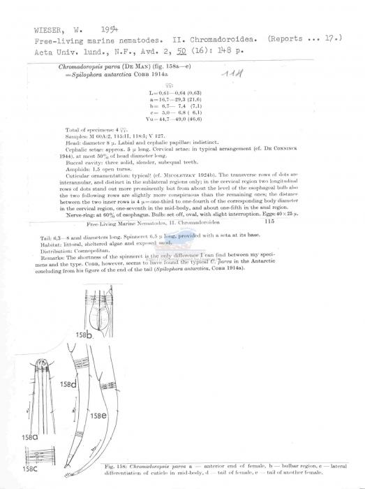 Chromadoropsis parva