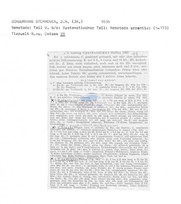 Cyatholaimus punctatus