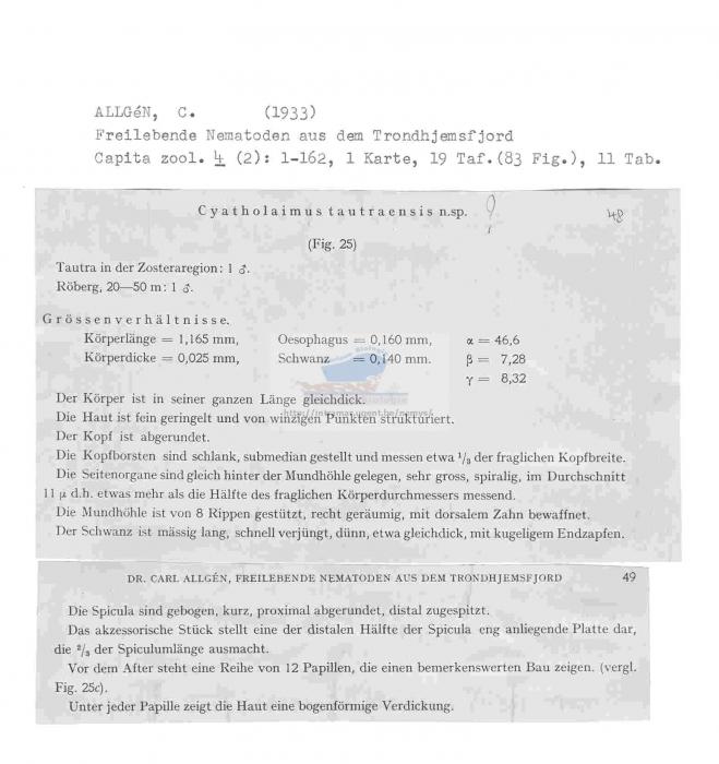 Cyatholaimus tautraensis
