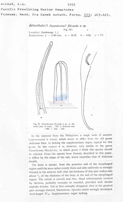 Anticomopsis filicauda