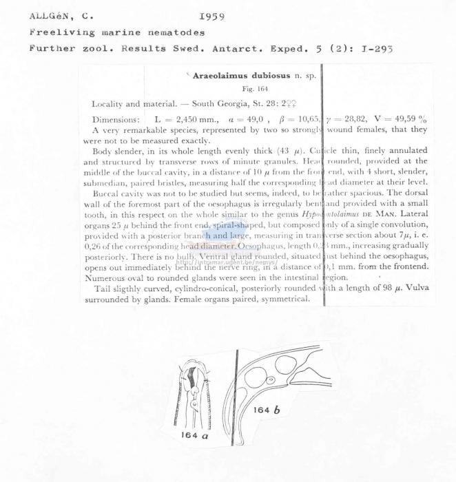Araeolaimus dubius