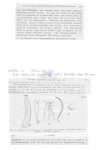 Nematode file-library of the Marine Biology Section (Ghent University, Belgium)