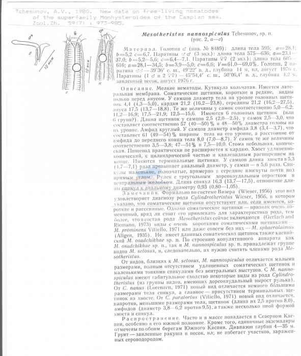 Daptonema nannospiculus