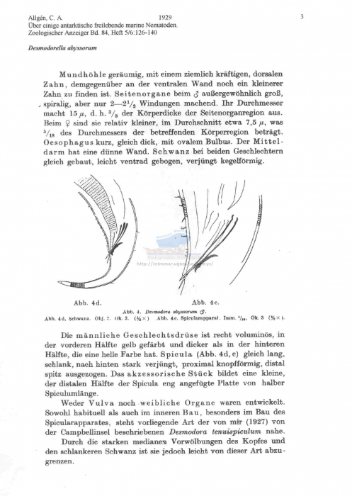 Desmodorella abyssorum