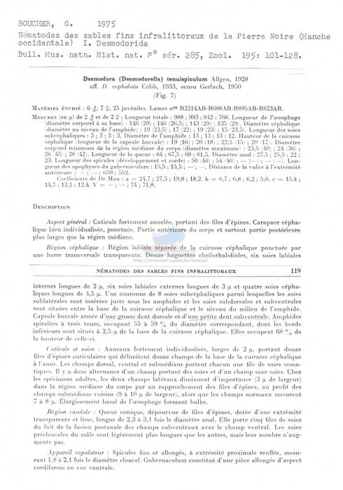 Desmodorella tenuispiculum