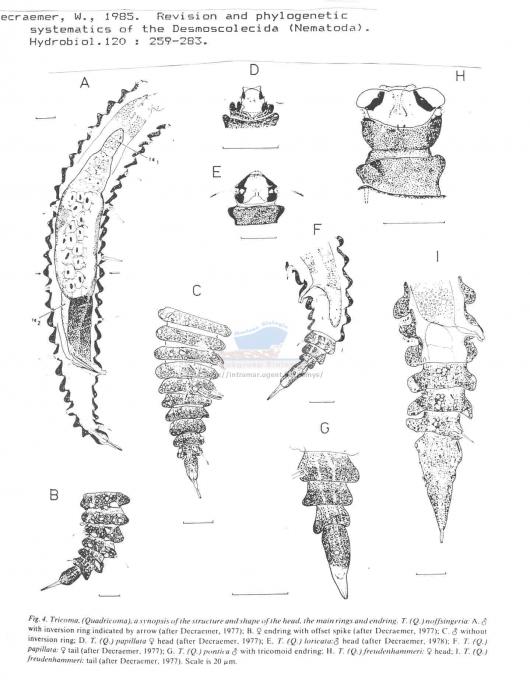 Desmoscolecidae