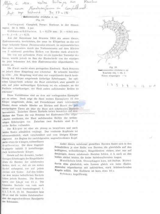 Desmoscolex cristatus