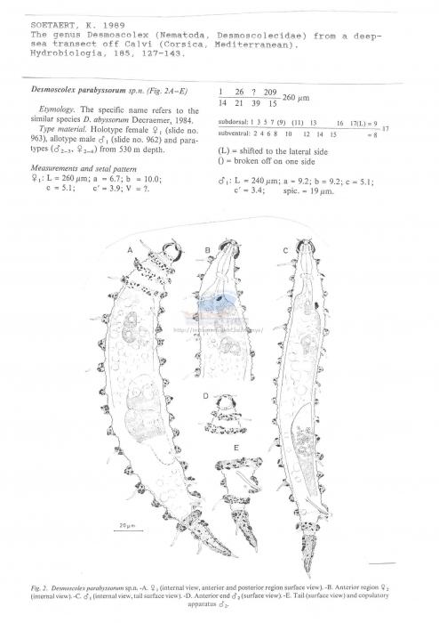 Desmoscolex parabyssorum