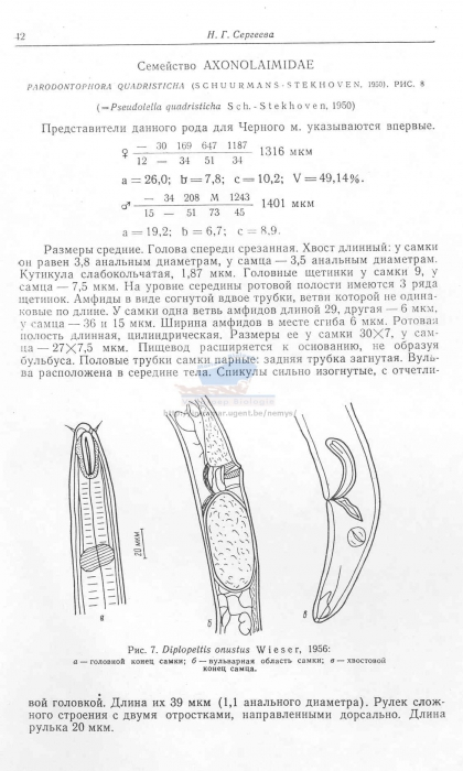 Diplopeltula onusta