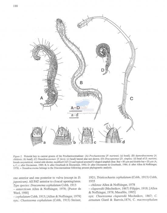 Draconematidae