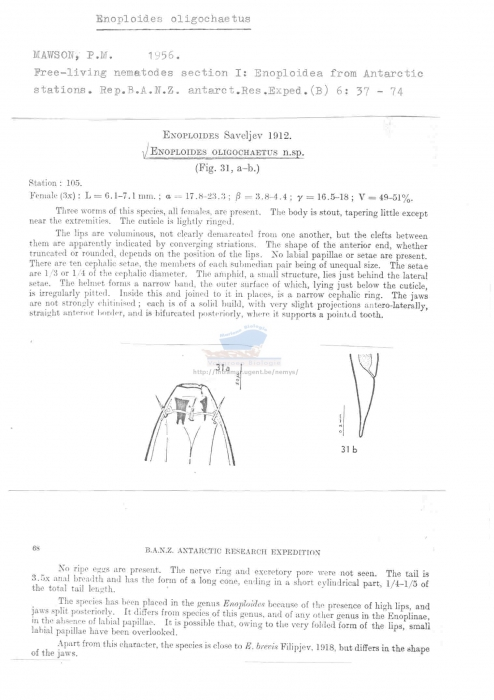 Enoploides oligochaetus