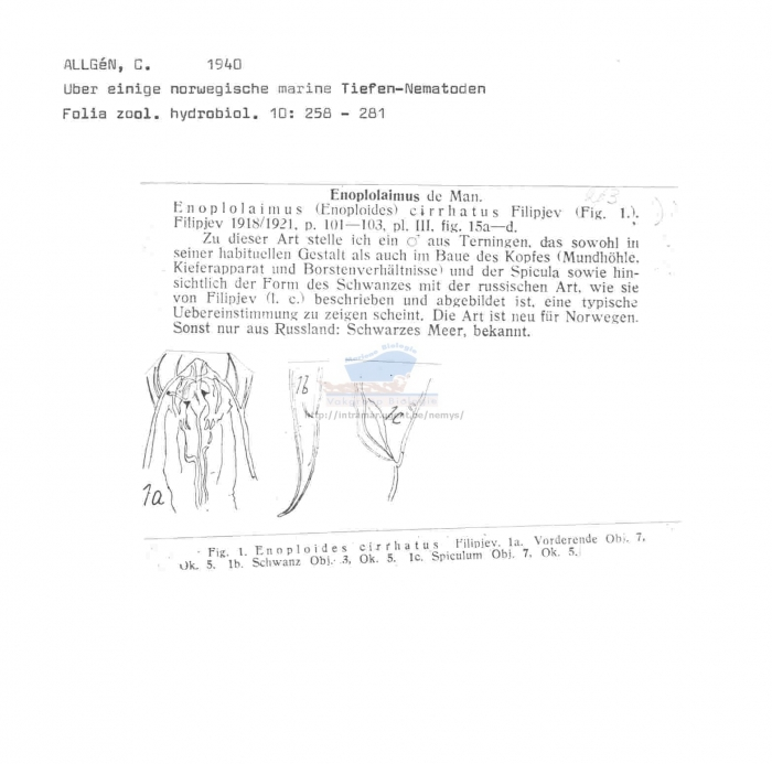 Enoplolaimus cirrhatus