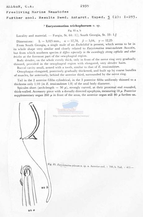 Eurystomina trichophorum