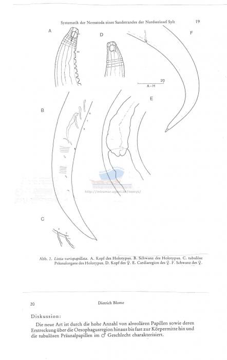 Listia variopapillata