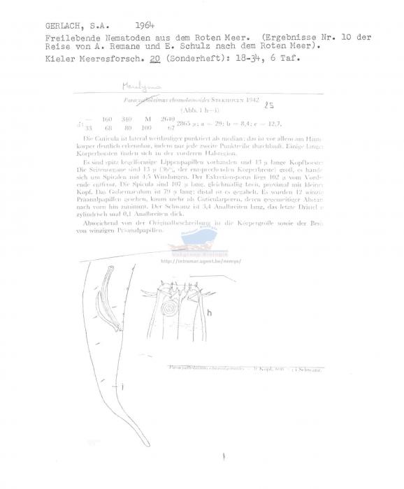 Marilynia choanolaimoides