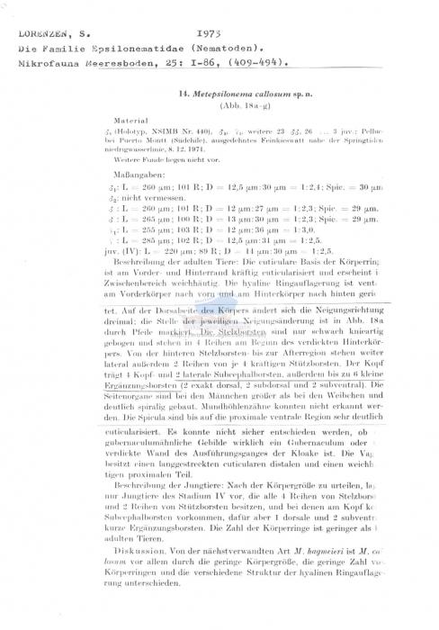 Metepsilonema callosum