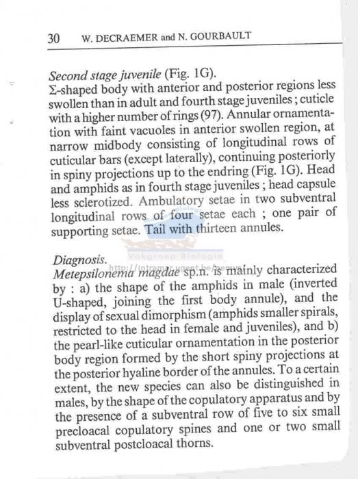 Metepsilonema magdae