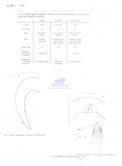 Meylia intermedia