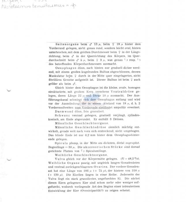 Microlaimus tenuilaimus