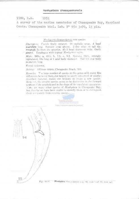 Monhystera chesapeakensis