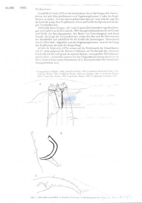 Odontophora paravilloti