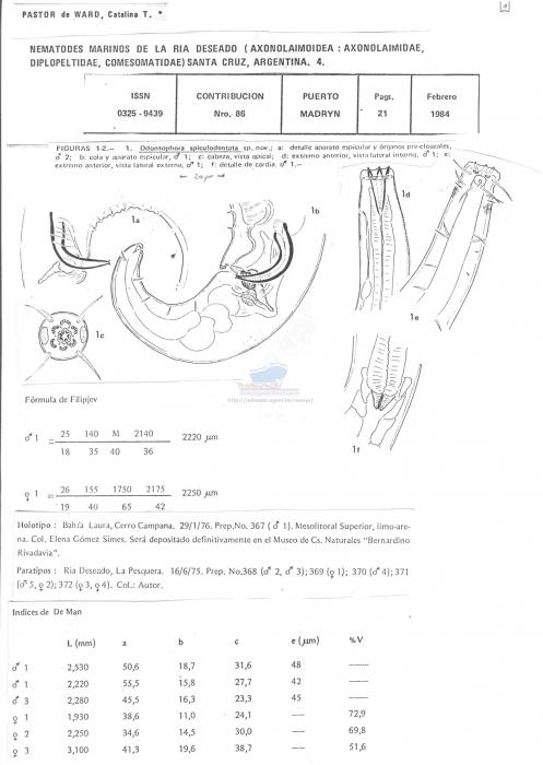 Odontophora spiculodentata