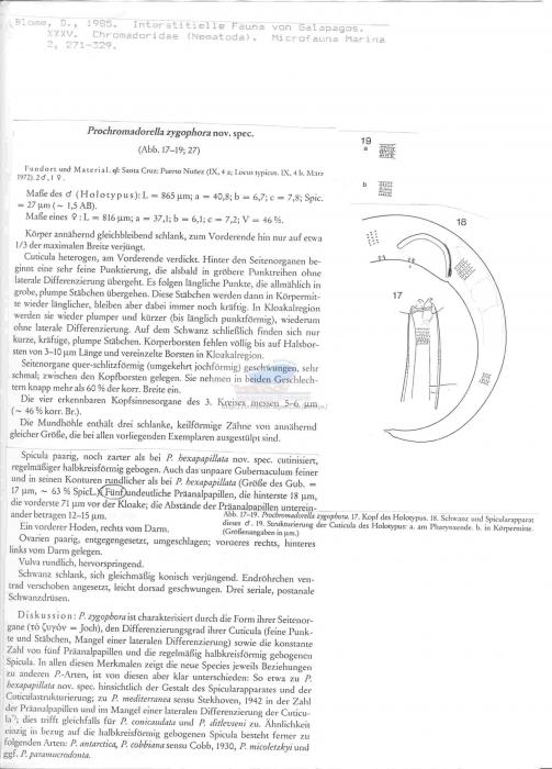 Prochromadorella zygophora