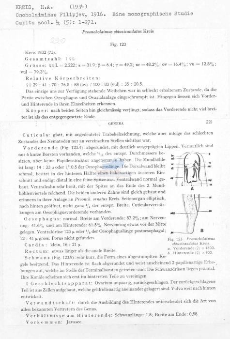 Prooncholaimus obtusicaudatus