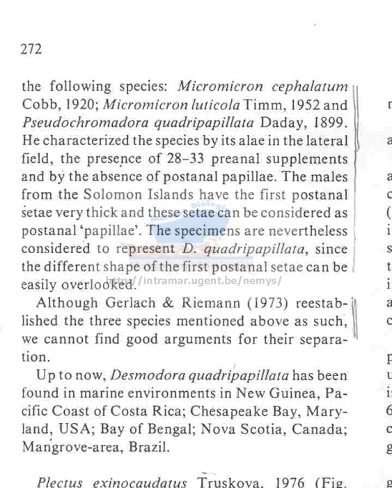 Pseudochromadora quadripapillata